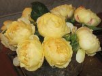 Yellow Cabbage Roses